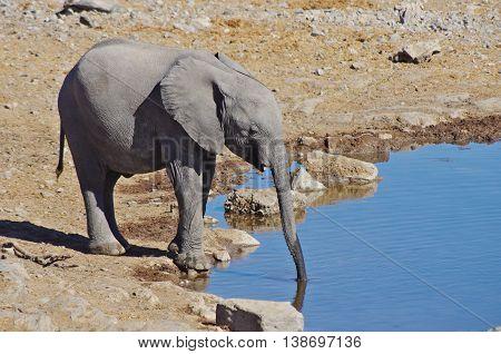 Elephants at the waterhole in Etosha National Park, Namibia