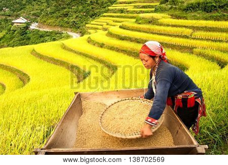 HA GIANG, VIET NAM, September 24, 2015 woman Hmong, high mountains, Ha Giang. Rice harvest, the rice terraces
