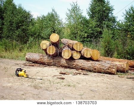 Felled logs of wood on the ground in the forest. Power saw.