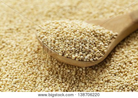 Quinoa grain in a wooden spoon close-up shot
