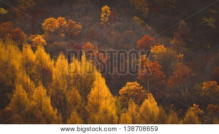 The changing of the leaves on mountain