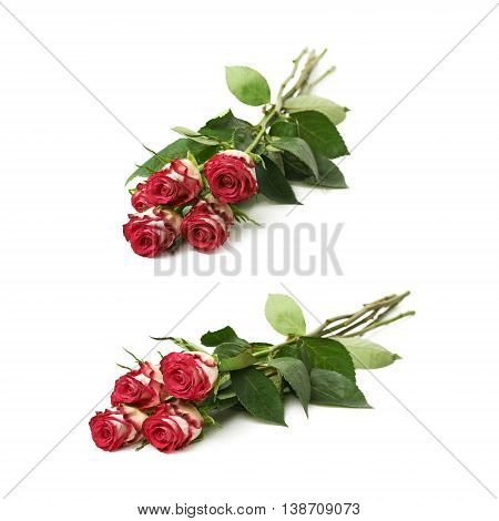 Pile of four white and pink colored roses isolated over the white background, set of two different foreshortenings