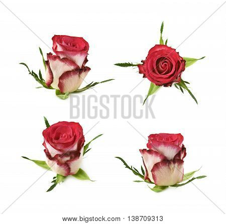 Single red and white rose bud isolated over the white background, set of four different foreshortenings