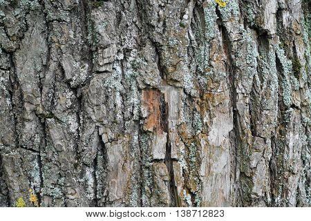 Tree bark texture background. Tree bark texture background.