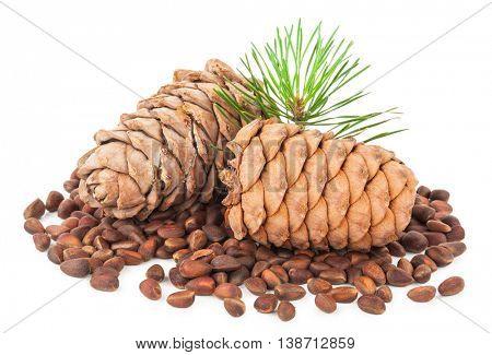 Cedar cones with branch