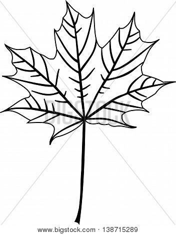 maple ,  isolated maple leaf , maple leaf illustration ,
