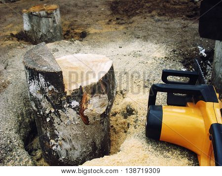 sawn off saw a log sticking out of the ground in the sawdust