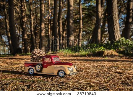 Small pickup truck in a pine tree forest with a pine cone on it.