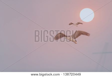 The nature of the birds fly freely in the morning or evening Liberty background the sun.