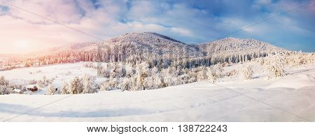 fantastic blue sky and snow-covered trees in the mountains