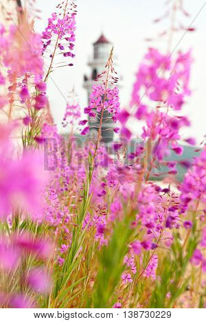 Lighthouse on the coast of Lake Baikal. Resort Goryachinsk, Siberia. Russia. View of lighthouse through the flowers Purple Alpine Cyprus.