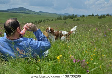 Man is playing on the field with his dog Cavalier King Charles Spaniel
