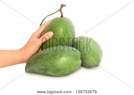 Fresh Mango - Green Mangoes On Woman Hands With Isolated On White Background.