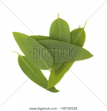 Fresh Eucalypus Leaves Isolated On White
