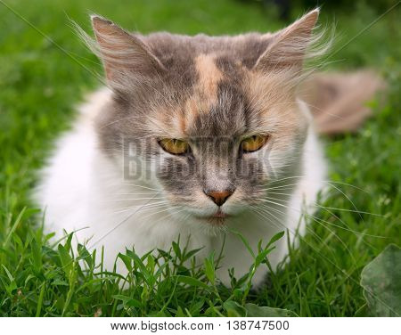 a cat sitting on a floral lawn