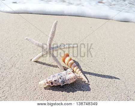 Starfish and conches on the beach with sea surf