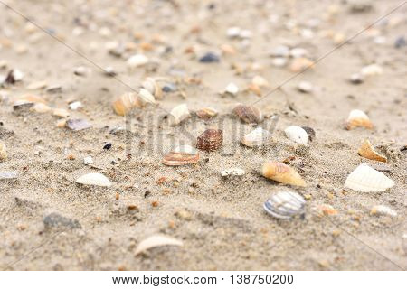 Sea shells at the beach, selective focus on the foreground with copy space. Sand and sea shells.