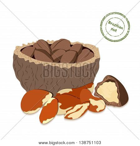 Vector illustration Brazil nut. A handful of shelled Brazil nuts in shell and shelled.