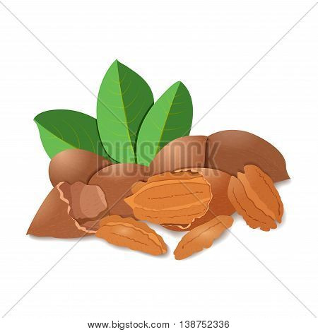 Vector illustration pecan nut. A handful of shelled pecans nuts in shell and shelled, leaves.