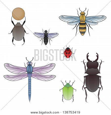 Dor beetle, fly, bee, dragonfly, ladybug, maybug and beetle rhinoceros. Vector Illustration.