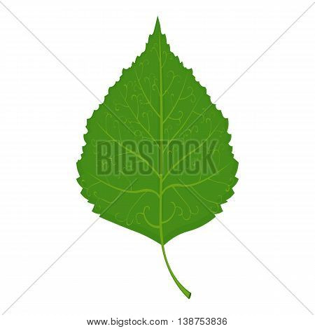 Green Birch leaf vector illustration isolated on a white background