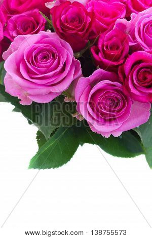bouquet of pink and magenta fresh roses and leaves close up border isolated on white background