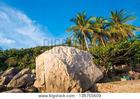 Tropical Rocky Beach With Coconut Palm Trees