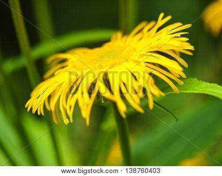 Yellow flowers macro up close 60 mm