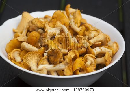 some delicious chanterelles frshly picked in the forest