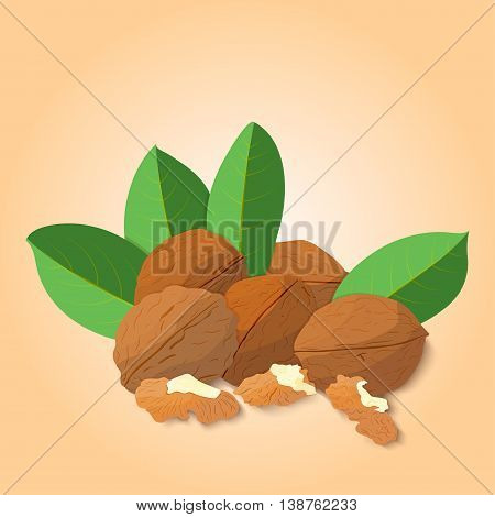 Vector illustration Walnut nut. A handful of shelled Walnuts nuts in shell and shelled, leaves. Tasty Image on beige background nuts for printing on packaging, advertising of healthy foods