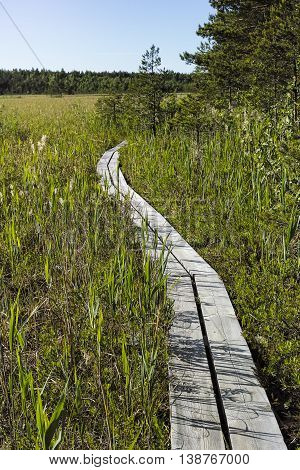 Valgejärve nature study trail in Estonia. Path through bog.