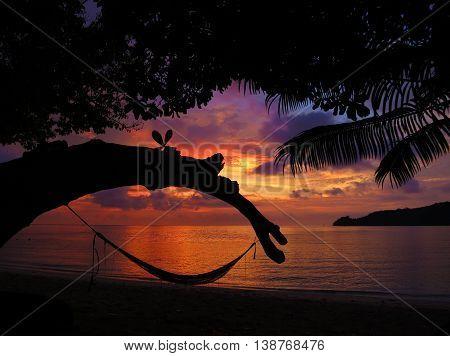 Tropical Hammock in Borneo, Malaysia, at Sunset