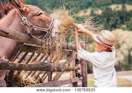 Boy helps to feed a donkey on the farm