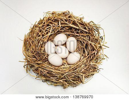 Six duck eggs in the hay nest on white background.