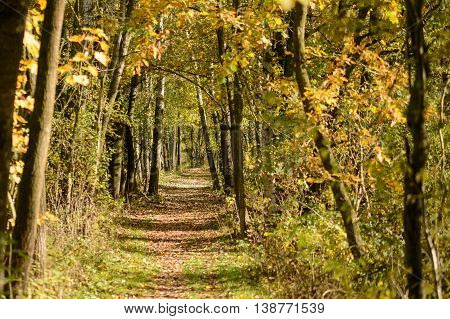 Golden colored autum forest with lane and foliage