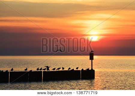 Seagulls sat on a wooden breakwater against the setting sun over the Baltic Sea in Kolobrzeg
