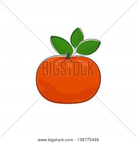 Citrus Mandarin Isolated on White Background, Tropical Fruit Tangerine, Vector Illustration