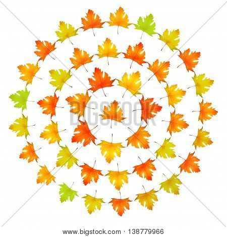 Maple leaves round frame vector illustration, design with beautiful autumn maple leaf isolated on white background