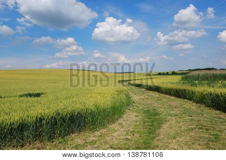 Country road through the wheat field with nice blue sky