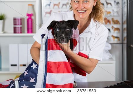 Veterinarian covering his american staffordshire dog with American flag