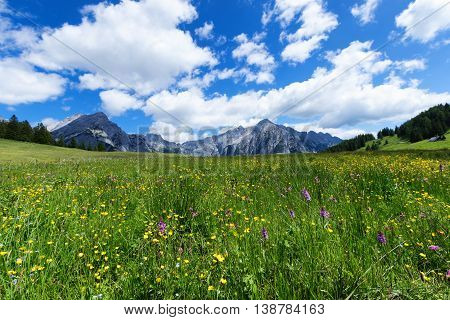 Alpine meadow on a sunnny day with mountain peaks in the background. Austria Tyrol Walderalm.