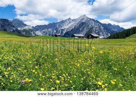 Alpine meadow with beautiful yellow flowers near Walderalm. Austria Tirol.