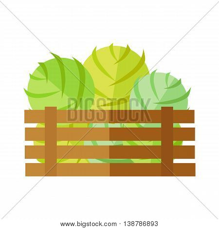 Fresh cabbage at the market vector. Flat design. Delivery farm products, grocery store assortment, foods for diet concept. Illustration of wooden box full of ripe vegetables. Isolated on white.