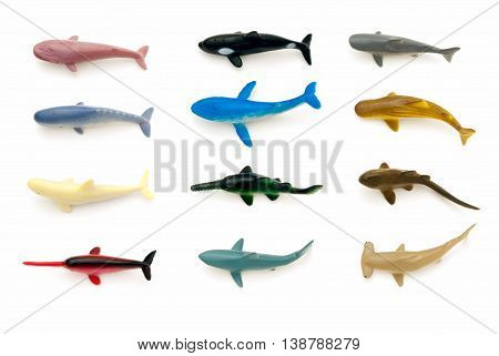 Sea Animals (sharks And Whales)