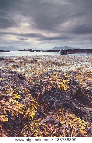 Exposed Seaweed at Coastal Beach with Fishing Boats in Background
