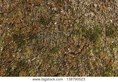 old rotten carpet sprouting moss. extreme close-up