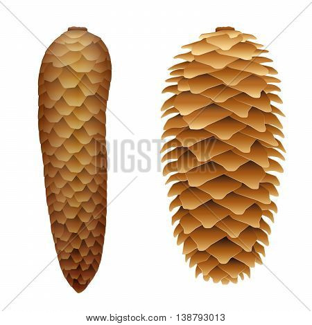 Spruce cones - with flat closed scales at humidity and protruding scales when dried.
