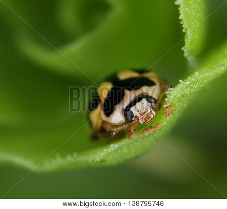 Ladybug In Green Environment