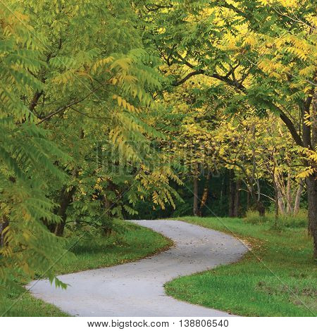 Walnut Trees In Autumnal Park, Large Detailed Landscaped Autumn Path Scene, Twisting Tarmac Walkway, Winding Asphalt Road Zigzag Perspective, Walnuts Parkland Pavement, Fall Solitude Concept, Green Lawn