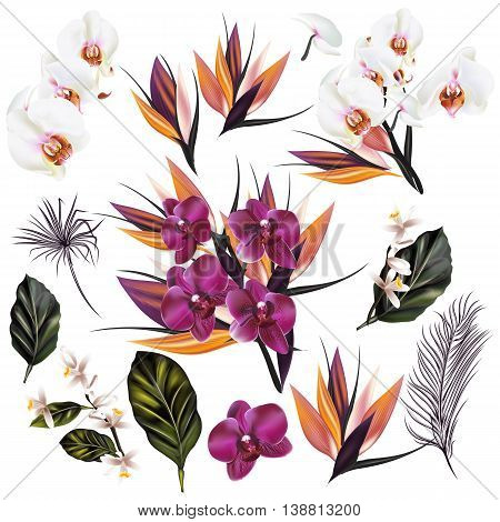 A collection of vector tropical plants orchids palm leafs and other flowers in realistic style